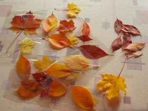 Um die schöne Herbstzeit etwas länger zu genießen, haben wir die schönsten Blätter einlaminiert. Diese kann man nun mit bindfaden anhängen oder auf dem Tisch auslegen.